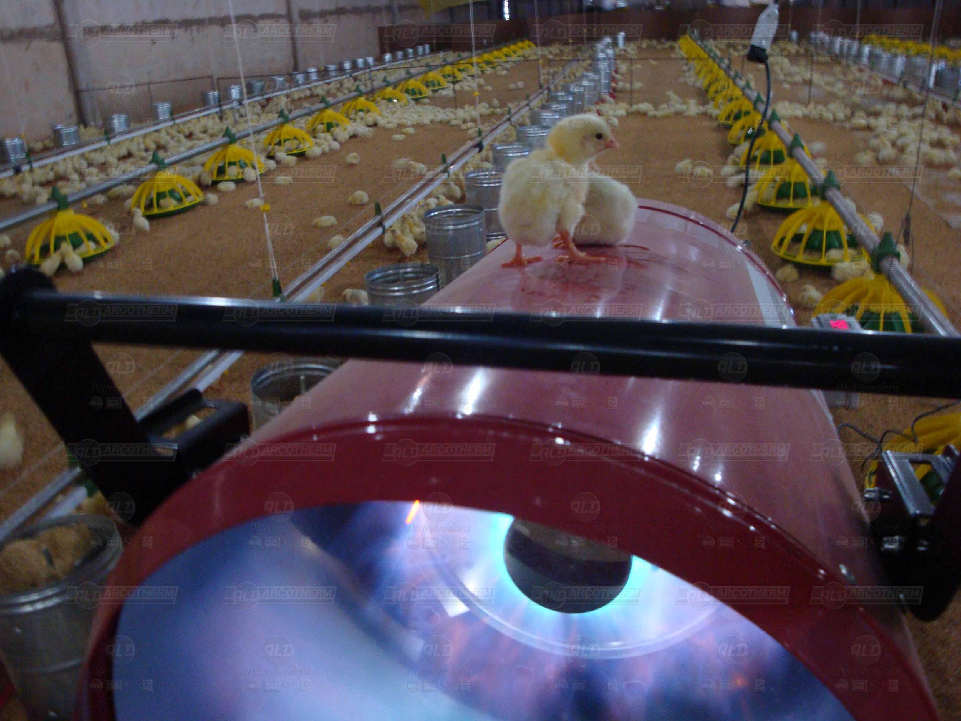 Granja - galpao frango de corte - aquecedor - gerador de ar quente - arcotherm- 7