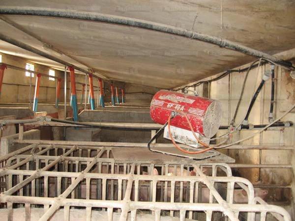 Suinos - galpao recria de leitoes - UPL - aquecedor - gerador de ar quente - arcotherm- 8