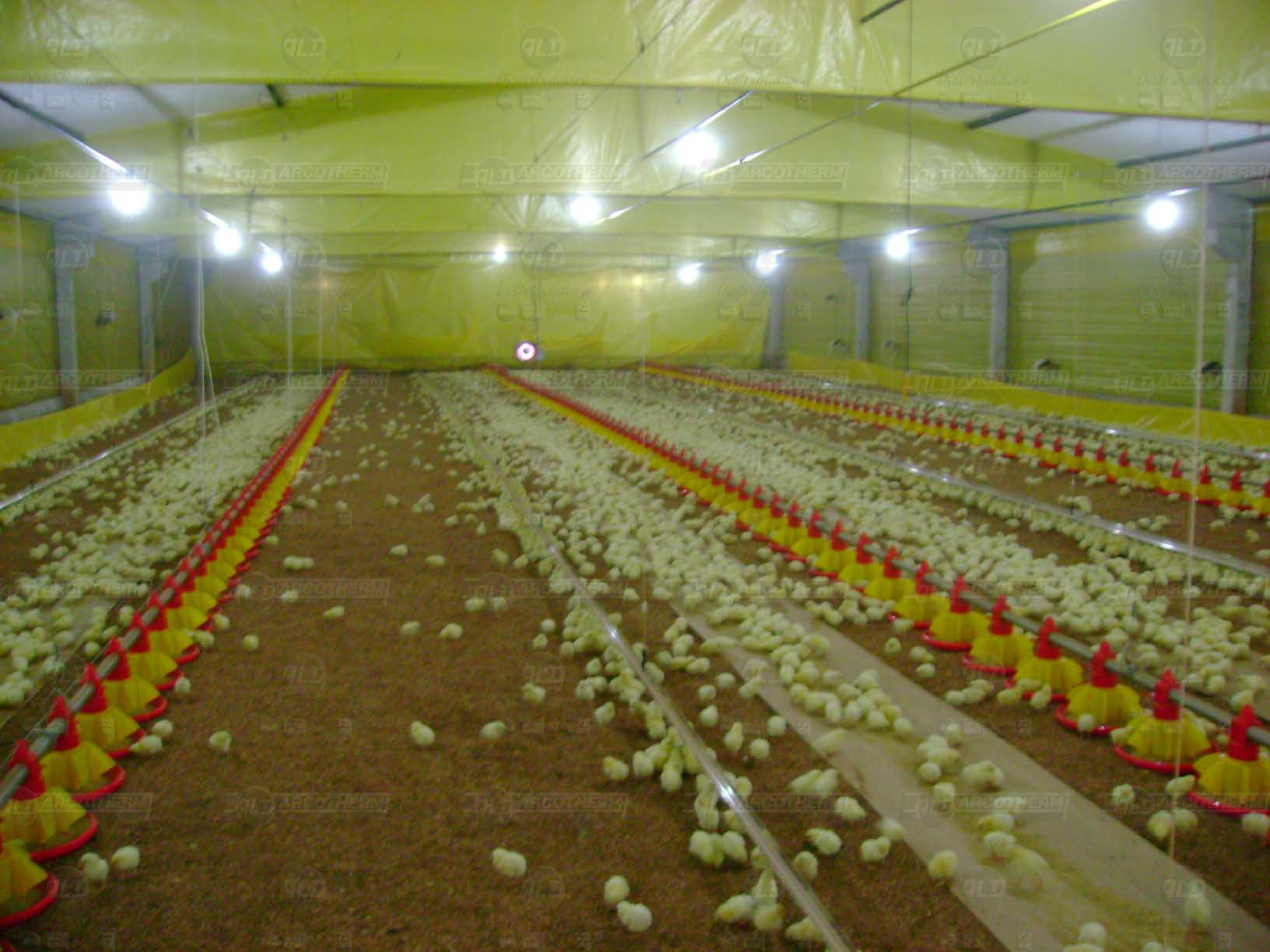 Granja - galpao frango de corte - aquecedor - gerador de ar quente - arcotherm- 5