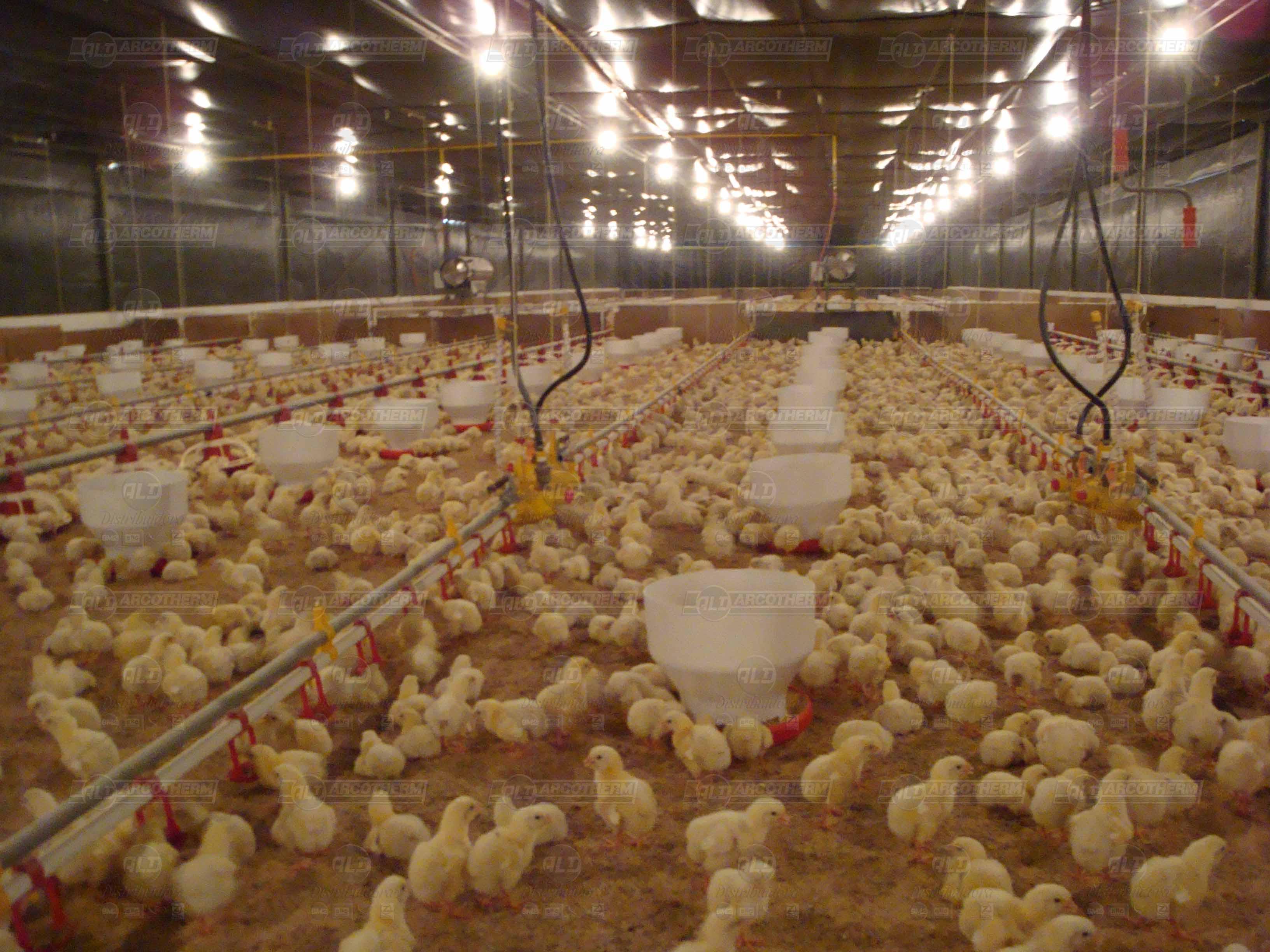 Granja - galpao frango de corte - aquecedor - gerador de ar quente - arcotherm- 9