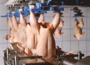 uma imagem sobre como abrir um abatedouro de frango