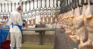 uma imagem sobre abatedouro para frangos