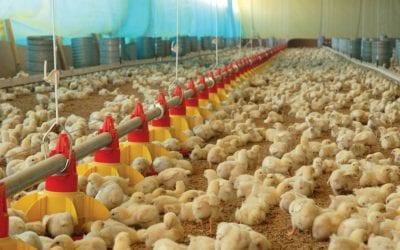 Como funciona o aquecimento de aviários?